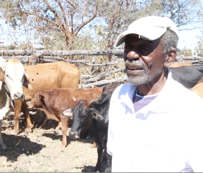 Mr Mpofu with cows for tithe